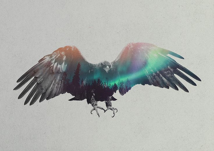 Double Exposure Portraits Of Animals In The Aurora Borealis, by Andreas Lie. Inspired by the wonderful winter here in Norway I wanted to create something that captured the mood of it. So I made these digital double exposures showing the beautiful combination of Norwegian fauna and the aurora borealis (northern lights). Hope you like them! -- hawk?