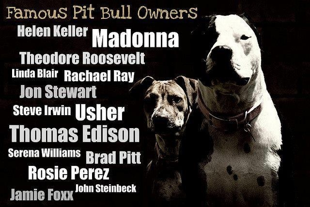 Just To Name A Few Famous Pitbull Owners Pitbull Quotes