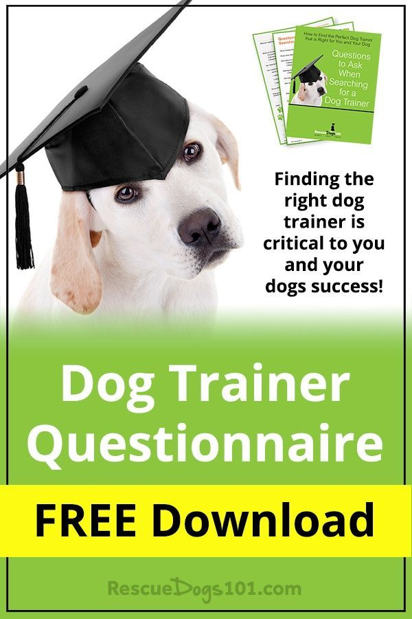 Finding The Right Dog Trainer Is Critical To You And Your Dogs