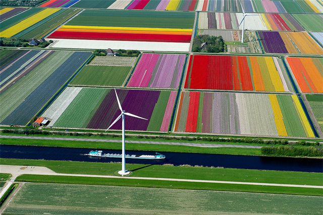 An aerial view of a tulip farm in the Netherlands shows just