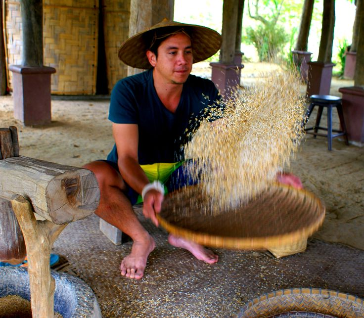 The Rice Is Life experience, learning about traditional rice harvesting in Laos.
