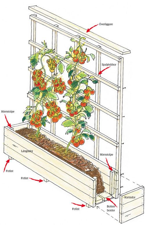 Bygg en odlingslåda med spaljé | Trädgårdsskötsel | Trädgård |