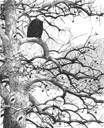 bald eagle print, David Allen Sibley, a gift from David D.