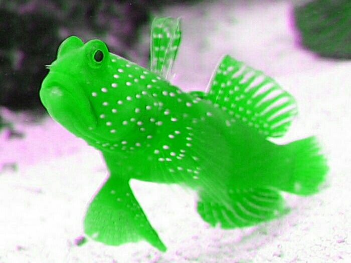how to make fake fish