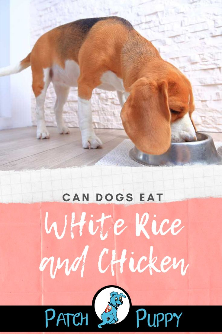 Can dogs eat white rice and chicken can dogs eat white