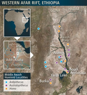 "A map of the area in Ethiopia where ""Ardi"" was found.Scientists in 2009 unveiled a fossil human ancestor dating back 4.4 million years — a creature more ancient than the famous fossil ""Lucy."" And, they say, even more important than Lucy. It's the closest thing yet to the common ancestor of both chimps and humans. That common ancestor is thought to have lived about 6 million years ago. From that animal - apes evolved one way - our ancestors evolved another (through several forms into what we…"