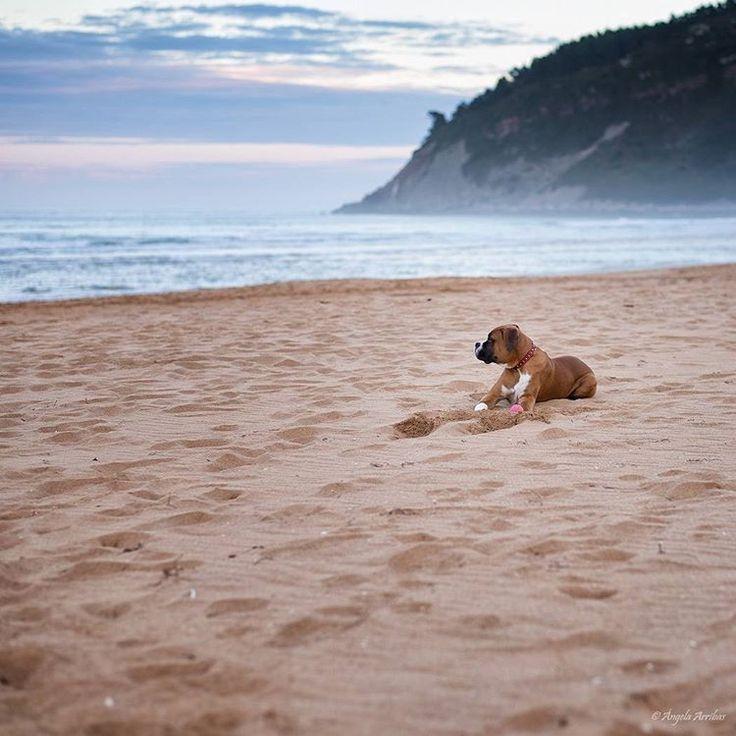 Después de la tormenta viene la calma.  www.angelaarribas.es  #boxer #dog #boxerdog #puppy #playtime #playa #perro #boxerlove #miboxermola #love #sunset #nature #atardecer #sol #color #sea #mar #citas #angelaarribas #asturfoto #Asturias #asturgrafias #sea #paz #paisaje #igers #instagramers #explore #photographer #picoftheday #dailyphoto
