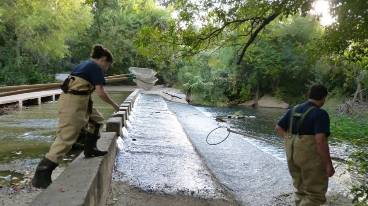 Our scientists conduct water quality monitoring and field assessments on the San Antonio River every day. This was taken 9/27/2012 — at San Antonio River.