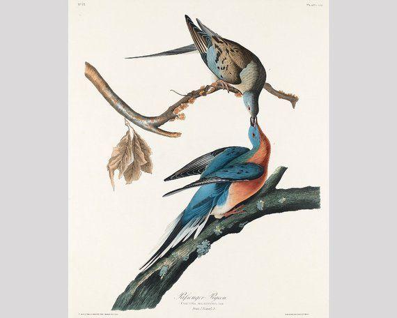 Roseate Spoonbill John James Audubon Wildlife Bird Nature Print Poster 11x14