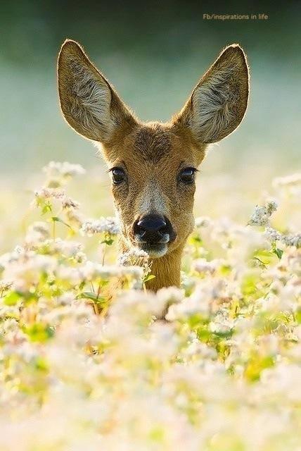 Deer heart.