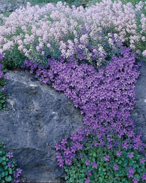 17 Best images about Rock Gardens Ground Covers – Rock Garden Plants