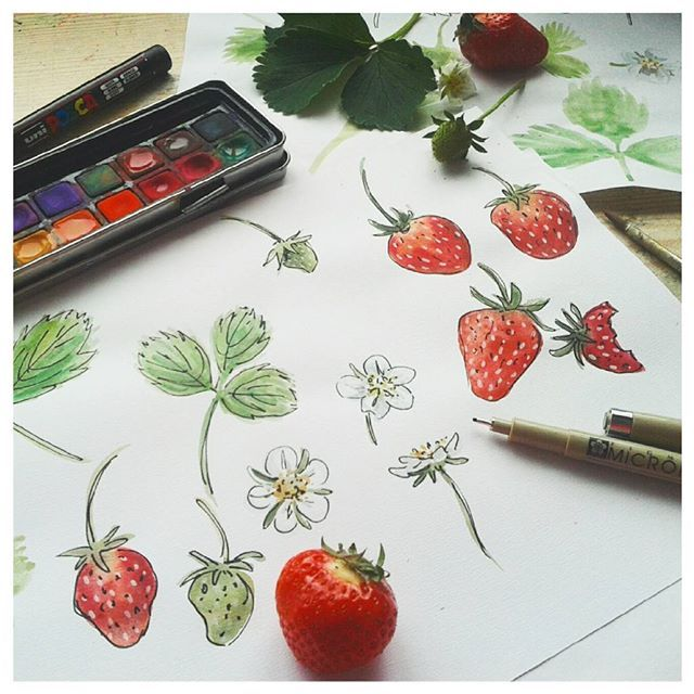 Working on some strawberry studies.  #strawberry #illustration #fruit #watercolour #sketching #linework #blackpen #leaves #artwork #drawing