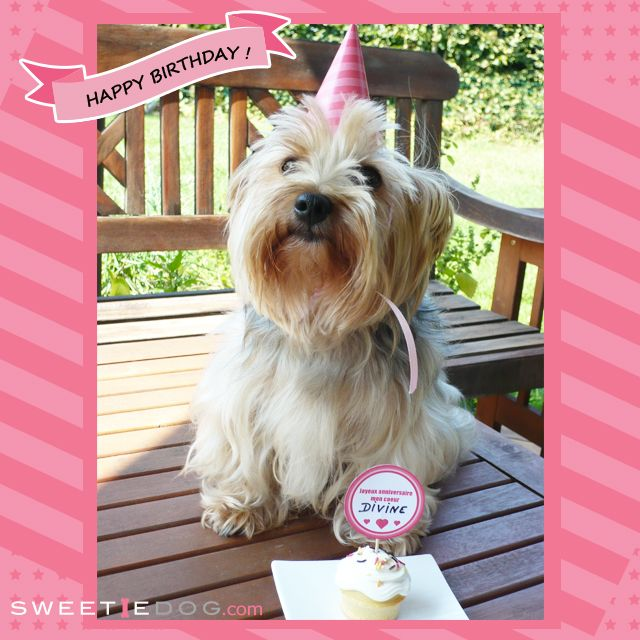 Anniversaire chien - Recette -cupcake - Toppers - Chapeau - Free - Goodies - Yorkie Didi - yorkshire - www.sweetiedog.com DIY homemade