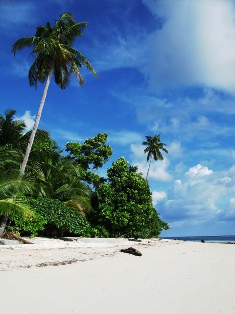 Beautiful beach in Wakatobi, South Sulawesi, Indonesia, join us on your next dive holiday, contact info@divesafariasia.com