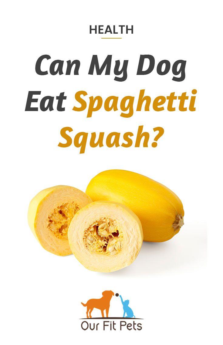 Can my dog eat spaghetti squash spaghetti squash dog