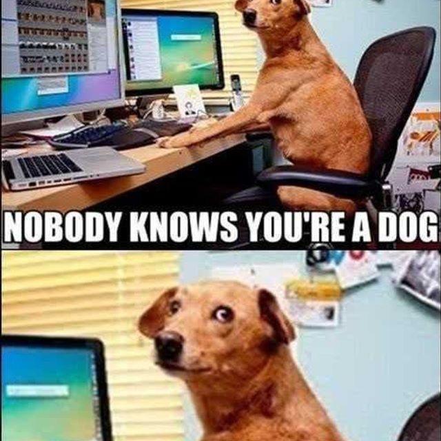 Funny Dog Memes Clean Funny Dog Memes 2018 Dog Meme Face Cute Dog Memes Dog Memes Best Dog Memes Dog Memes Clean Funny Boyfriend Memes Funny Dog Captions