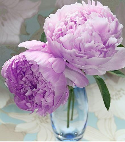 LAVENDER PEONIES | BOW DOWN/I BEEN ON PURPLE====These are so soft and lovely.