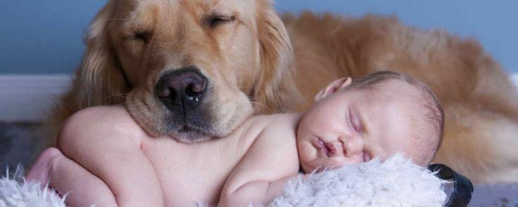 Boris, il primo cane a mettere le zampe in un asilo