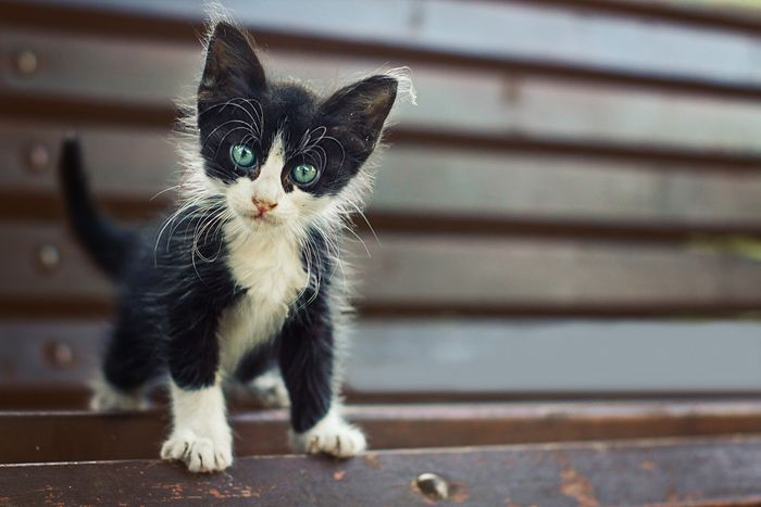Domestic and Cute Cats Photography