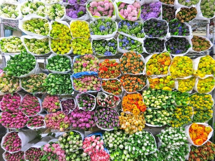 fun pics of the NYC flower mart - eye candy!