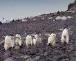 Penguins!!: Photo Galleries