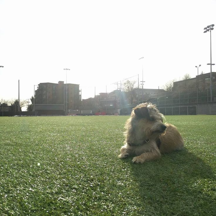 Last hurrah at the Seattle University Logan field #winterbreak #nostudents