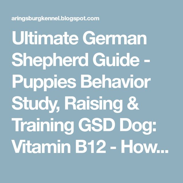 Ultimate German Shepherd Guide - Puppies Behavior Study, Raising & Training GSD Dog: Vitamin B12 - How Important Is It For Your Dog?