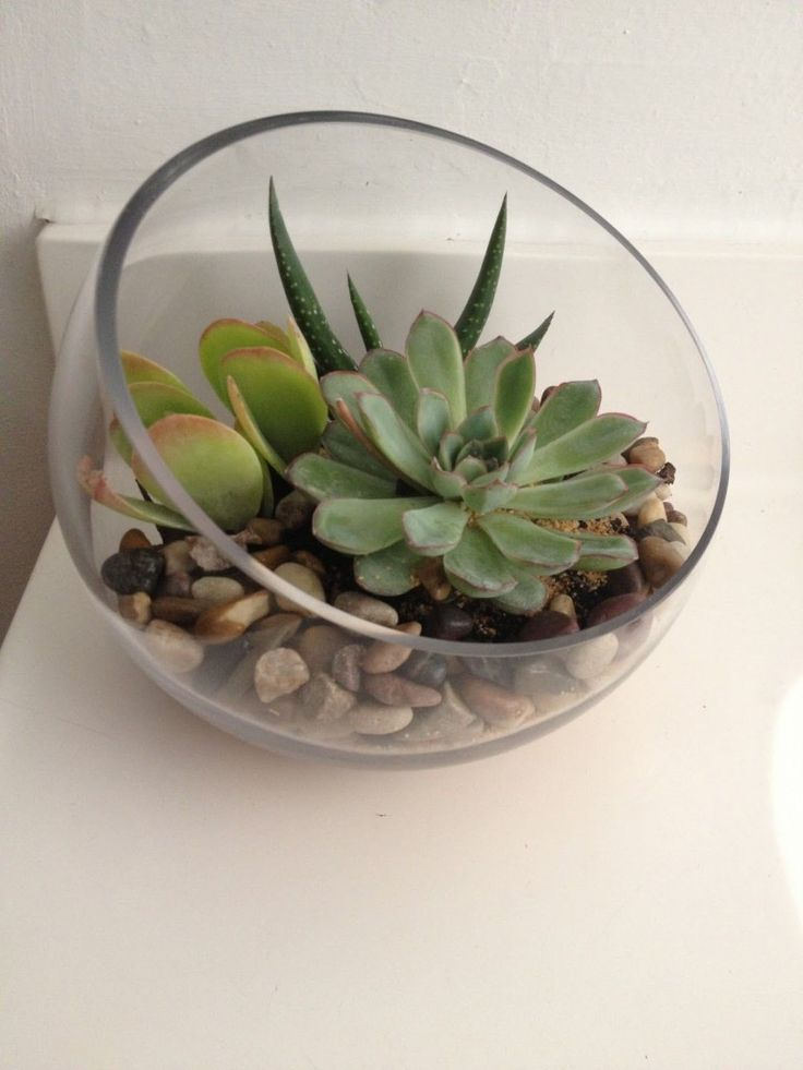 Tremendous 25 Best Ideas About Where To Buy Succulents On Pinterest Hairstyle Inspiration Daily Dogsangcom