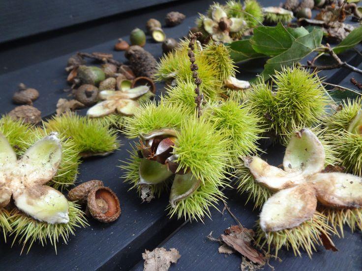 Buitenleven | Genieten van jouw herfst tuin • Stijlvol Styling - Woonblog •