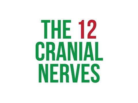 Dysphagia Cafe Unplugged: The 12 Cranial Nerves Song