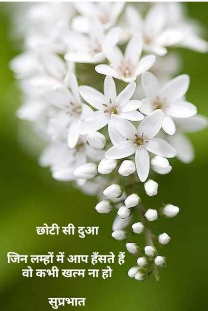 Quotes And Whatsapp Status Videos In Hindi Gujarati Marathi Amazing Flowers Beautiful Flowers White Flowers