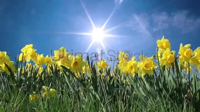 Sunny springtime