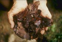 Wissenswertes über Asche als Dünger und im Kompost