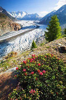 Aletschgletscher. Wallis. So amazing. #Switzerland