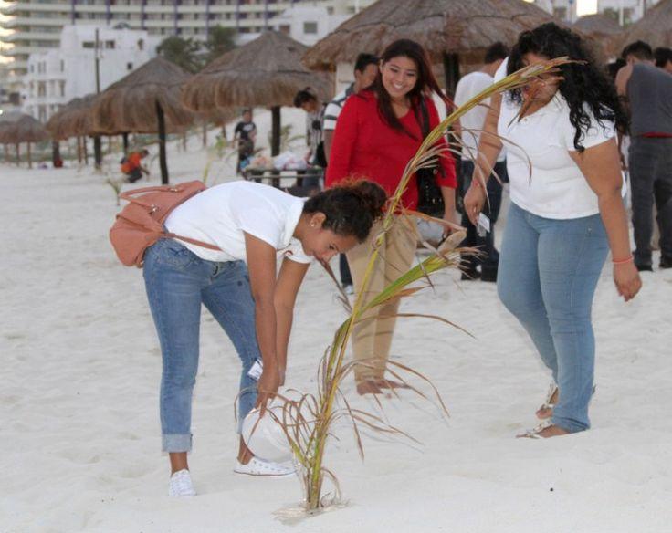 Cancún: Riego de palmeras en zona hotelera