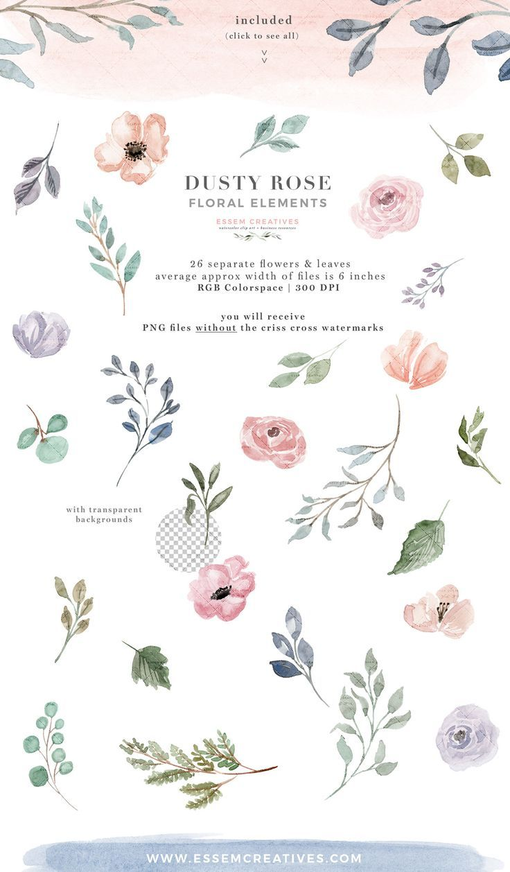 Dusty Rose Watercolor Flowers Clipart Peach Cream Blush Floral