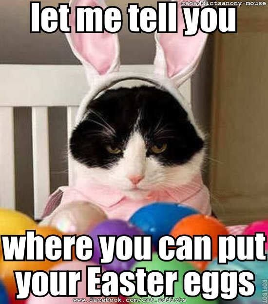 Image result for easter grass cats funny