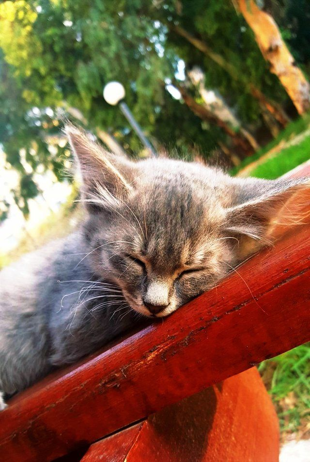 Met this stray kitten sleeping on a bench in the park