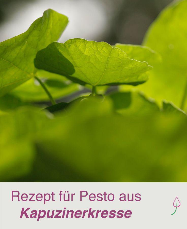 Mal was anderes: Rezept für Pesto aus Kapuzinerkresse