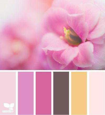 Pink Color Scheme 79 best pink palette images on pinterest | colors, design seeds