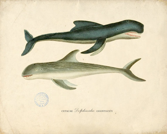 antique dolphins print