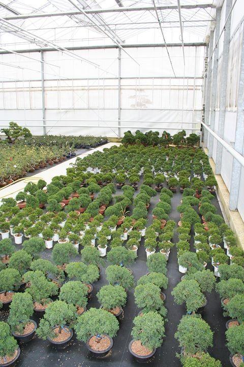 Bonsai nursery *sigh!