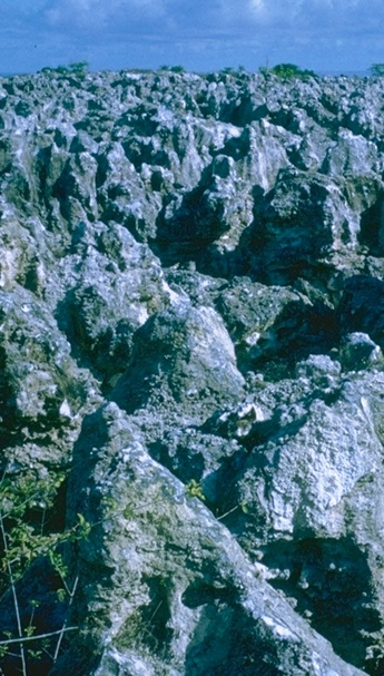 This is how the governments of UK, Aust and NZ left Banaba after mining phosphate for 80 years. These coral pinnacles reach a depth of 60 feet