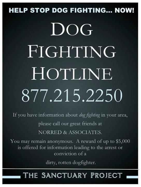 stop dog fighting now ~ share this anywhere you think it can be useful. Ask your vet if you can post it on their bulletin board so others can have the number.