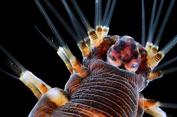 Dit zijn de 20 mooiste microscopische foto's van het jaar
