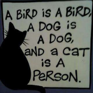 A bird is a bird, a dog is a dog and a cat is a person. ♥♥♥ Um pássaro é um pássaro, um cachorro é um cahorro e um gato é uma pessoa.