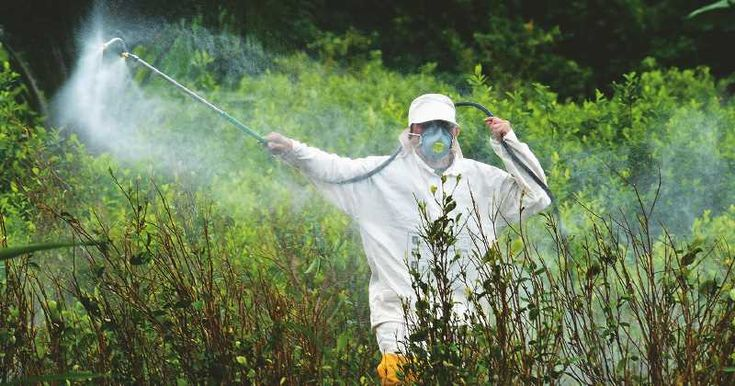 La única excepción a la que no podemos apelar en nuestro país, Argentina, son las fumigaciones que hace el Estado por ejemplo contradengue, zika y chikungunya. Pero la justicia en California igualmente les dijo NO.