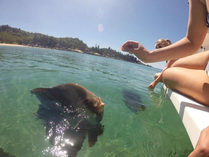 Feeding the Bat Fish in Florence Bay, Magnetic Island.
