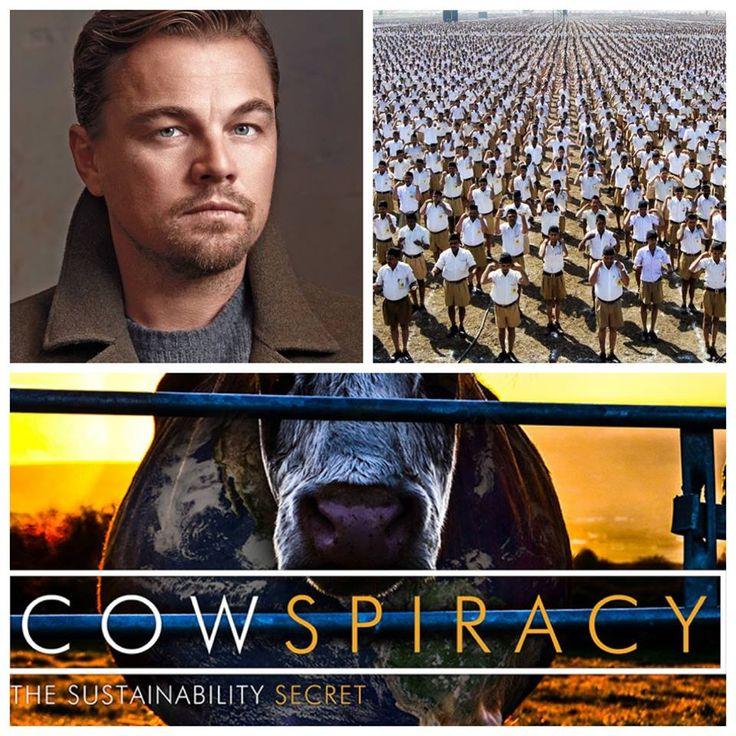 """""""CONSPIRACY"""" z udziałem DiCaprio - producenta filmu COWSPIRACY polega na tym, że aktor weźmie udział  w wydarzeniu hinduskiej nacjonallistycznej organizacji RSS, by szeroko propagować  weganizm, jego wpływ na środowisko, ludzkie zdrowie i los zwierząt, z kolei RSS liczy na to, że udział gwiazdy przysporzy rozgłosu i sympatyków tej fundamentalistycznej organizacji. A wszystko w imię odejścia od  wołowiny. Dwa powody - ten sam cel! #dicaprio #cowspiracy #conspiracy #weganizm #vegan #pureveg"""