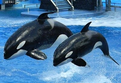 SeaWorld is one of Orlando's most popular family attractions – perfect for the little one's, Grandpop, and everyone in between. I have vivid memories of watching the Killer Whales catch air when I was a child and have always wanted to bring my kids, Miles, 10, and Milan, 8, to experience the same thrill. We …